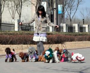 small dogs are more popular in Chinese cities, probably due to high population density